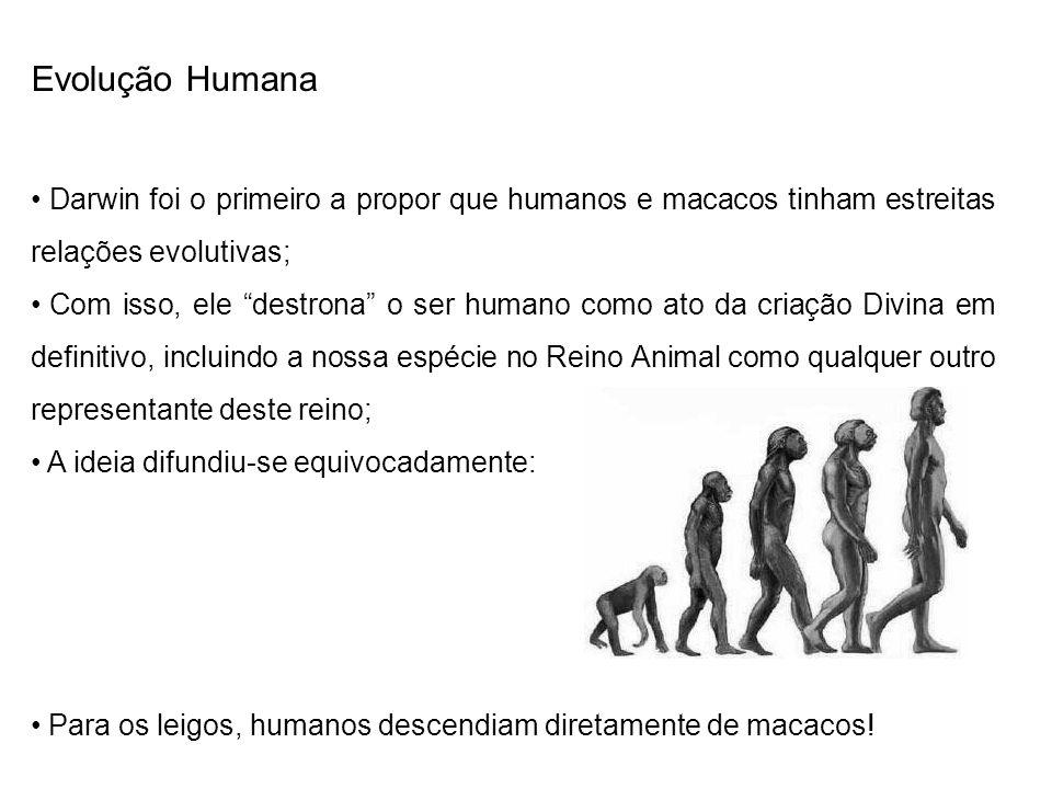 Evolução Humana Darwin foi o primeiro a propor que humanos e macacos tinham estreitas relações evolutivas;
