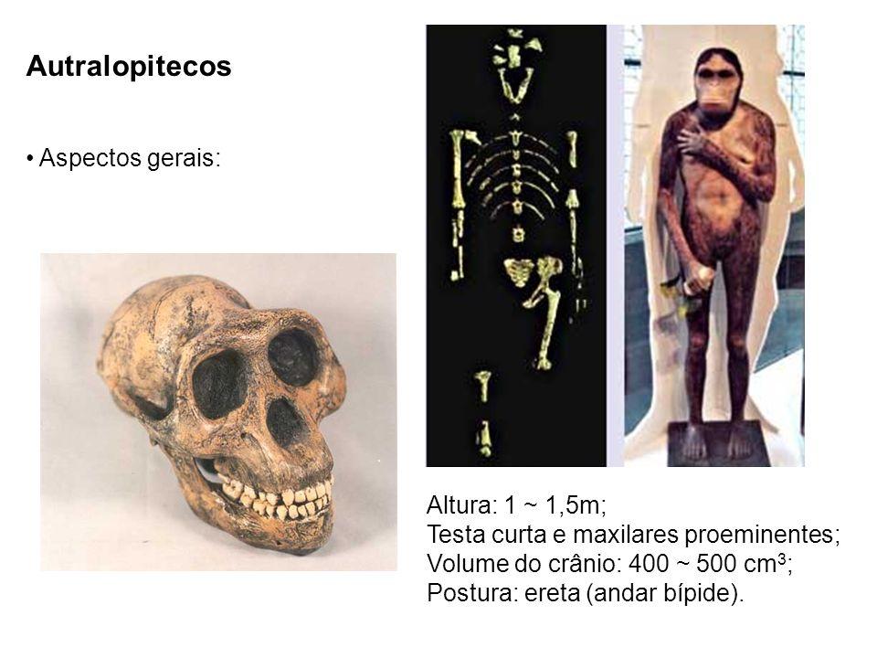 Autralopitecos Aspectos gerais: Altura: 1 ~ 1,5m;