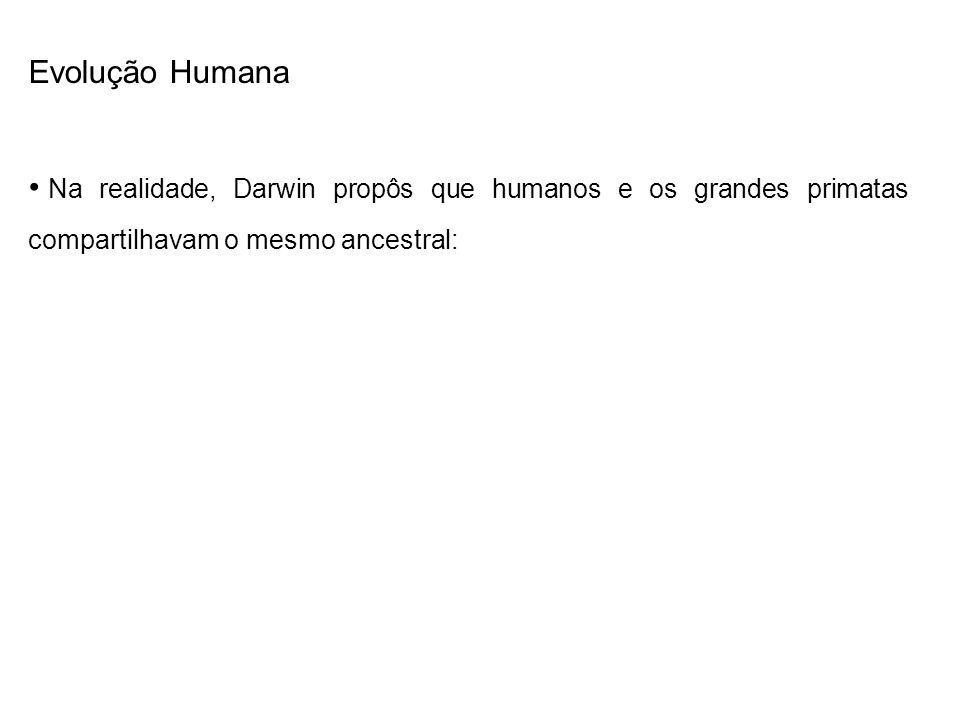 Evolução Humana Na realidade, Darwin propôs que humanos e os grandes primatas compartilhavam o mesmo ancestral: