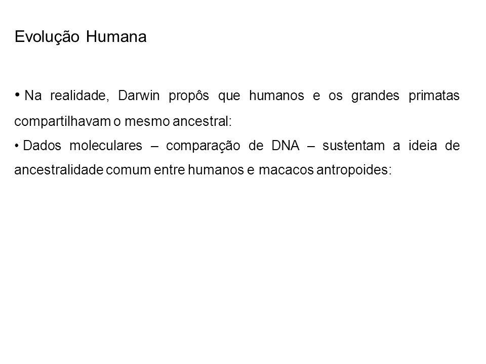 Evolução HumanaNa realidade, Darwin propôs que humanos e os grandes primatas compartilhavam o mesmo ancestral: