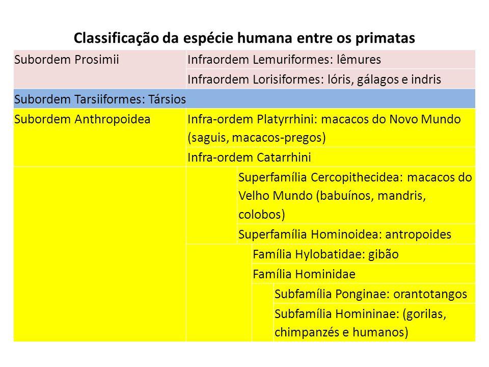 Classificação da espécie humana entre os primatas