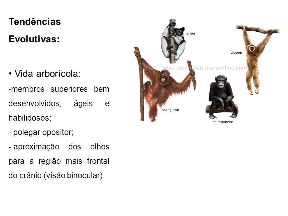 Tendências Evolutivas: