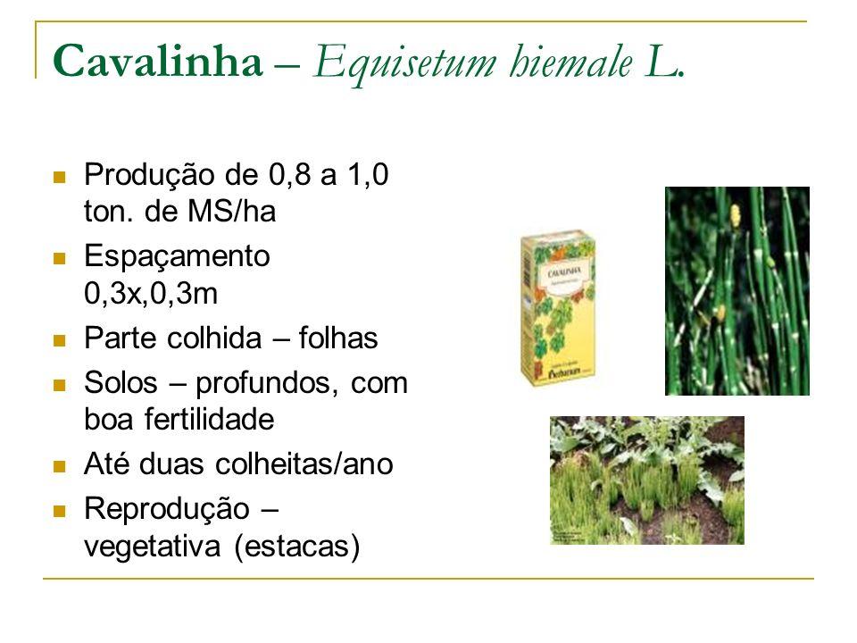 Cavalinha – Equisetum hiemale L.