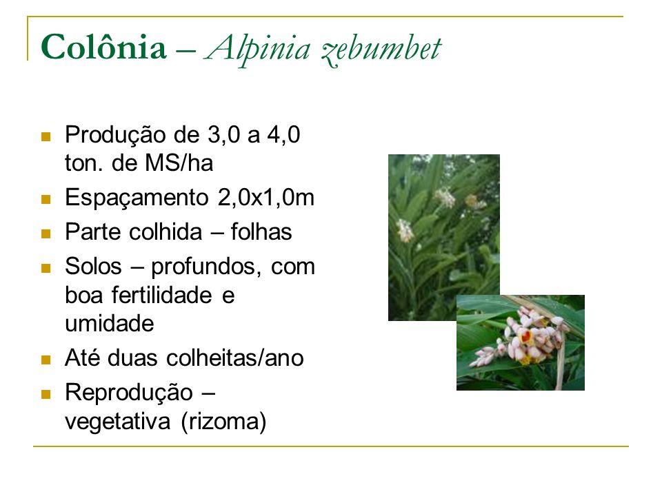 Colônia – Alpinia zebumbet