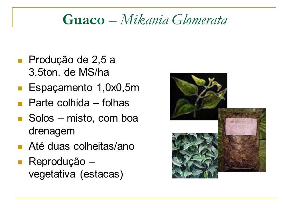 Guaco – Mikania Glomerata