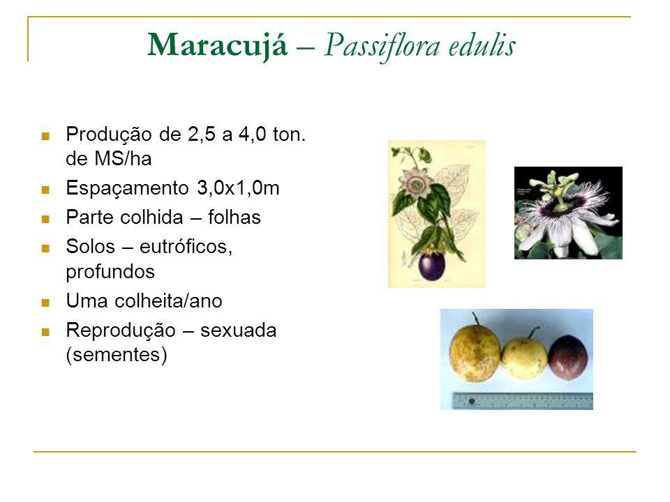 Maracujá – Passiflora edulis