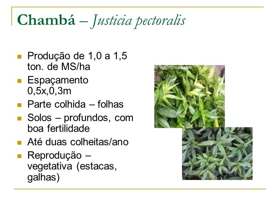 Chambá – Justicia pectoralis