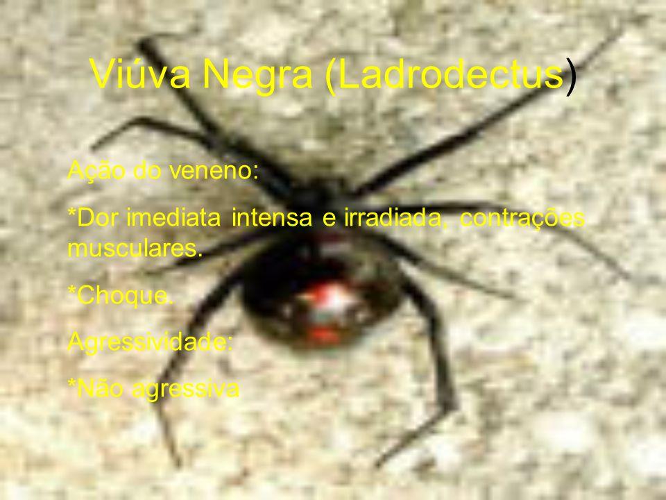 Viúva Negra (Ladrodectus)