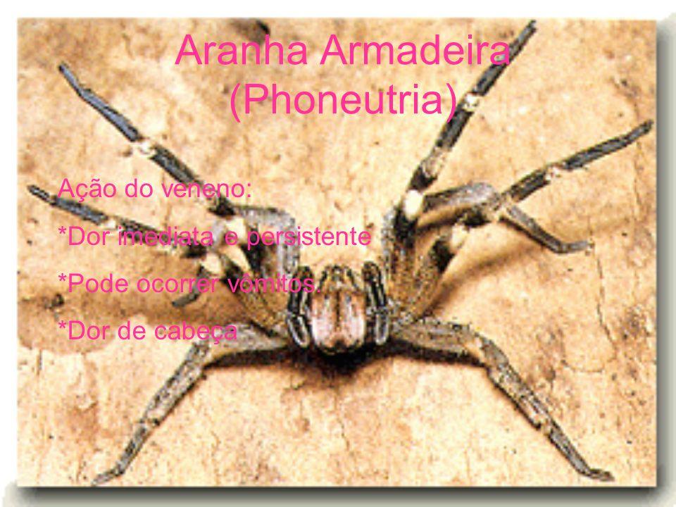Aranha Armadeira (Phoneutria)