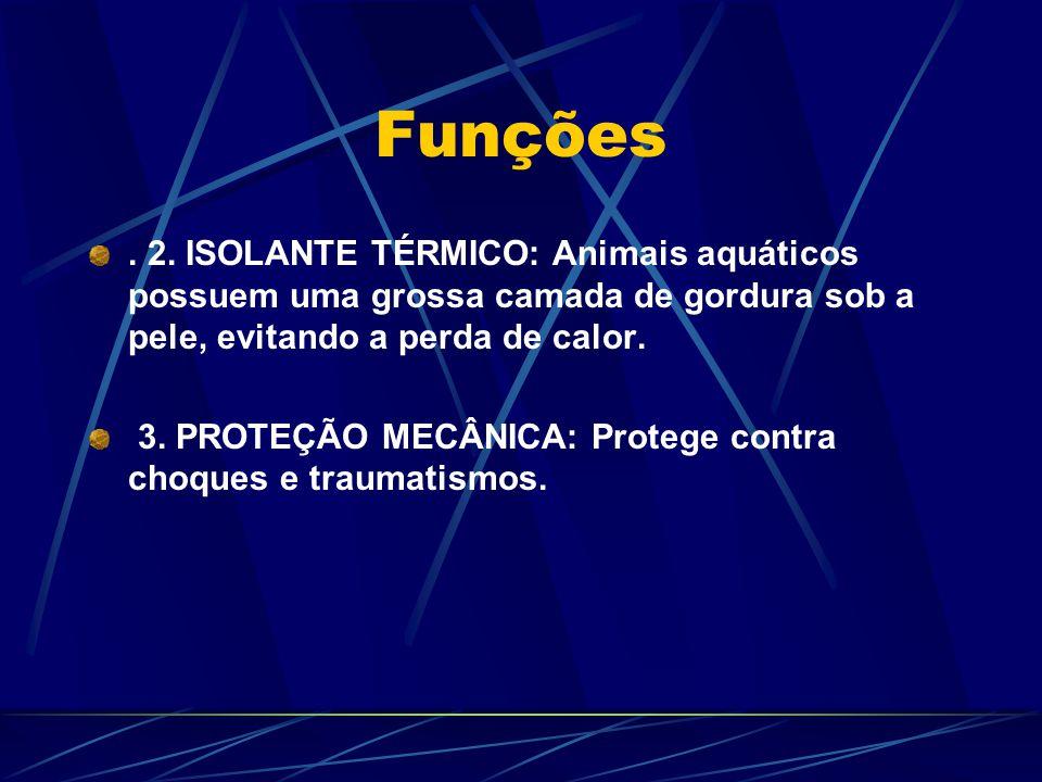 Funções . 2. ISOLANTE TÉRMICO: Animais aquáticos possuem uma grossa camada de gordura sob a pele, evitando a perda de calor.