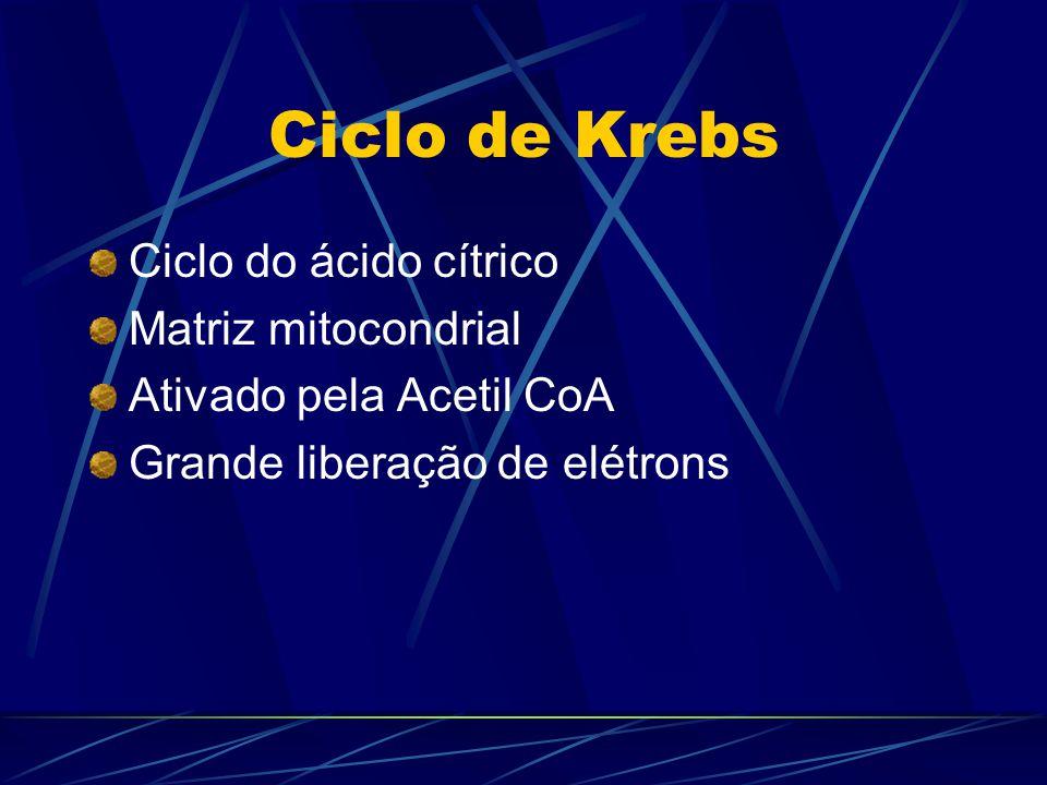 Ciclo de Krebs Ciclo do ácido cítrico Matriz mitocondrial