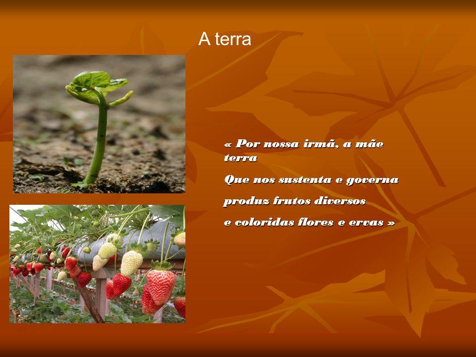 A terra « Por nossa irmã, a mãe terra Que nos sustenta e governa