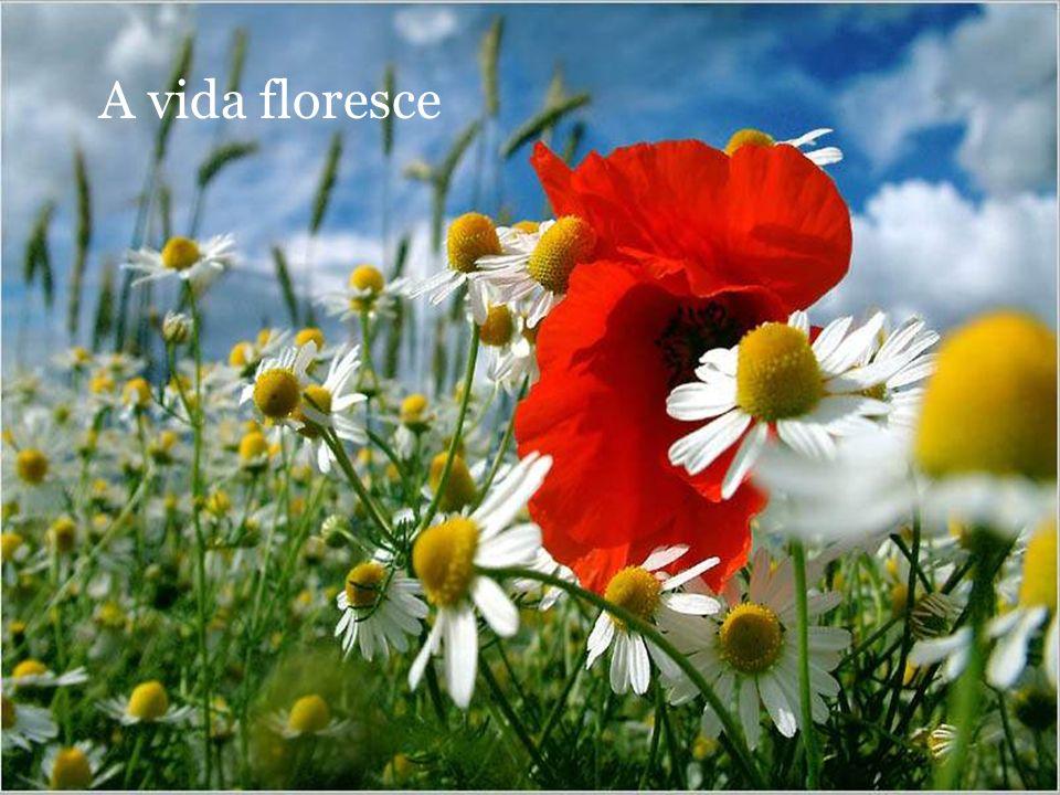 A vida floresce