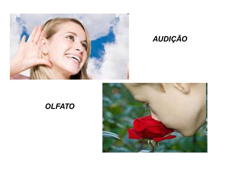 AUDIÇÃO OLFATO