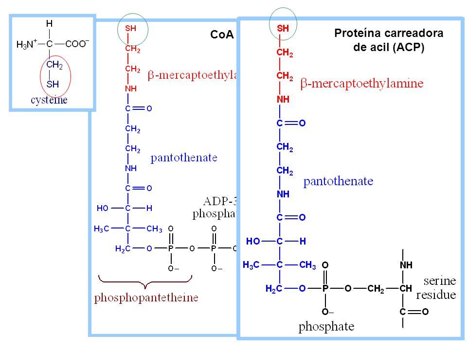 Proteína carreadora de acil (ACP)