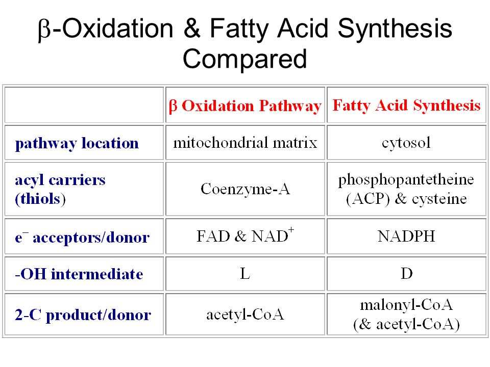 b-Oxidation & Fatty Acid Synthesis Compared