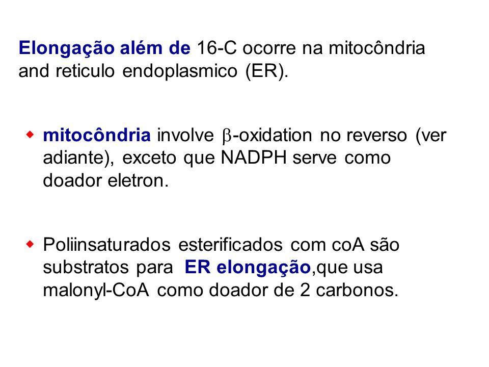 Elongação além de 16-C ocorre na mitocôndria and reticulo endoplasmico (ER).