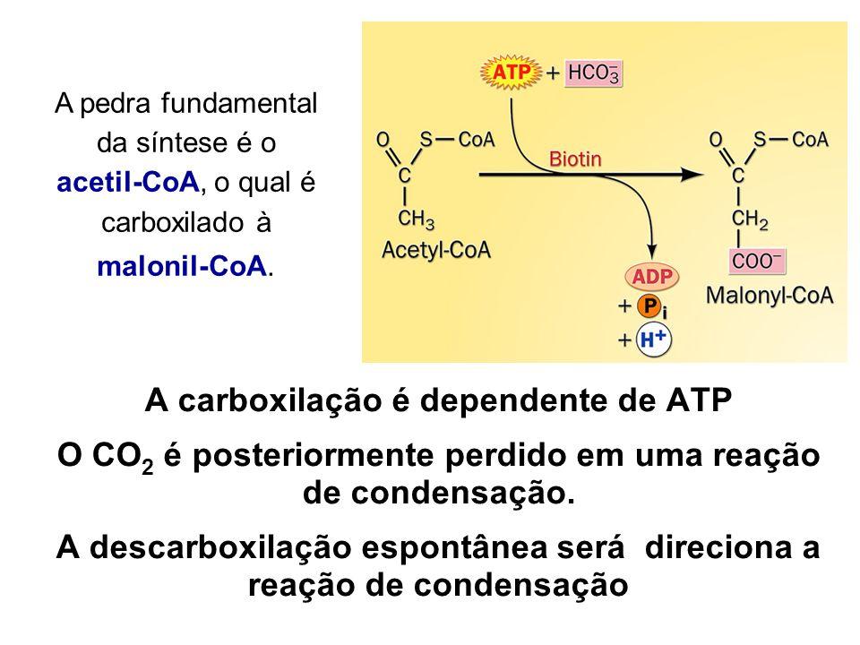 A carboxilação é dependente de ATP