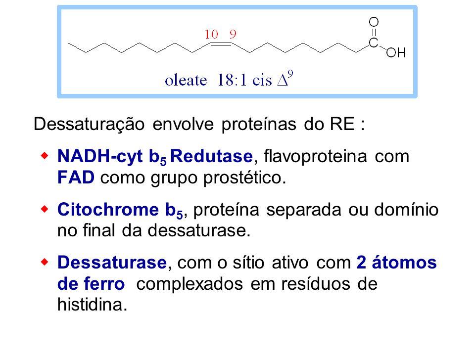 Dessaturação envolve proteínas do RE :