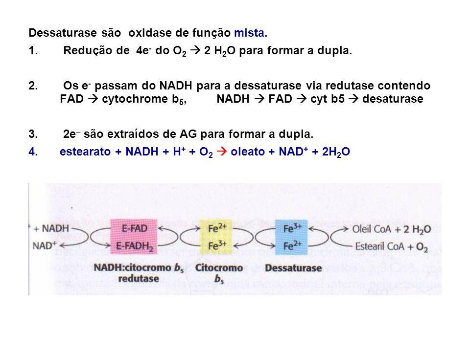Dessaturase são oxidase de função mista.