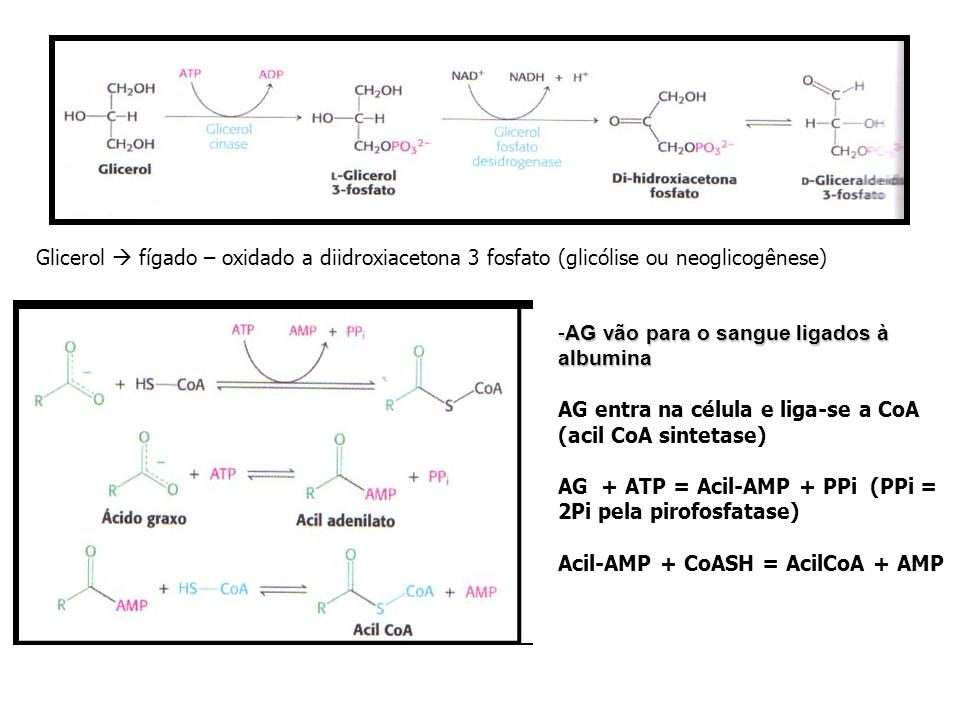 Glicerol  fígado – oxidado a diidroxiacetona 3 fosfato (glicólise ou neoglicogênese)