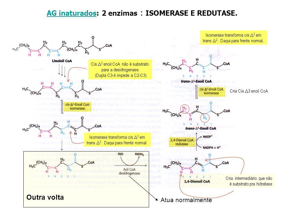 AG inaturados: 2 enzimas : ISOMERASE E REDUTASE.