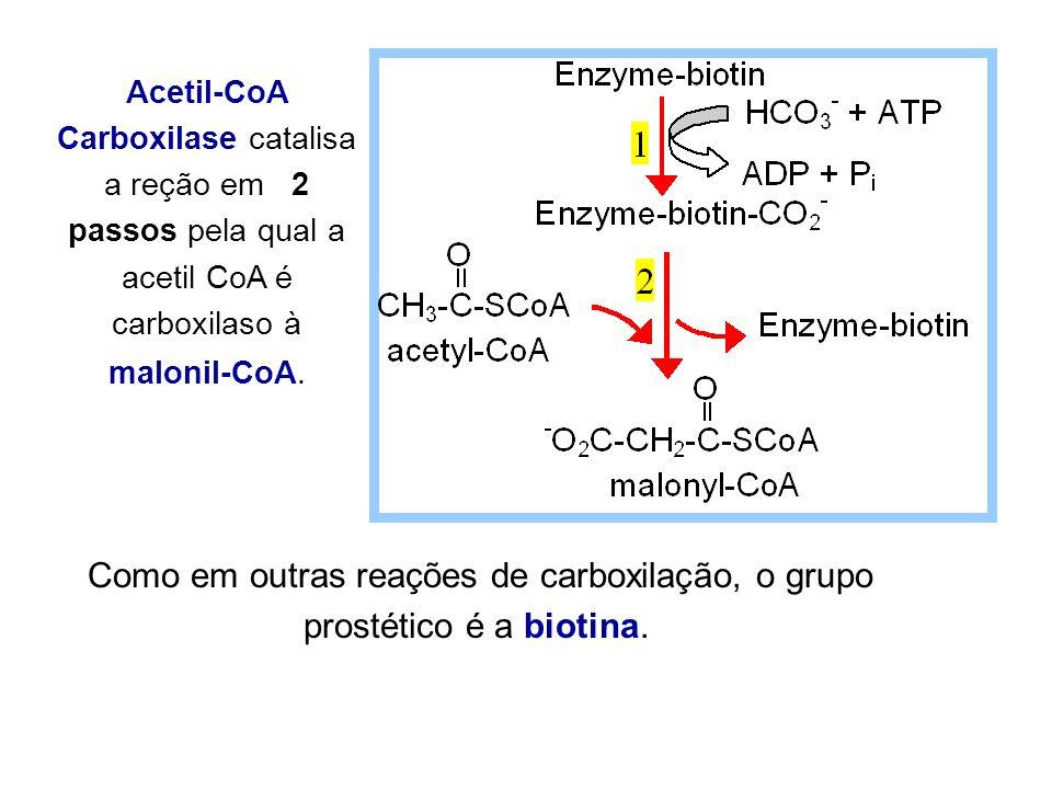 Acetil-CoA Carboxilase catalisa a reção em 2 passos pela qual a acetil CoA é carboxilaso à malonil-CoA.