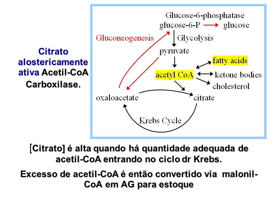 Citrato alostericamente ativa Acetil-CoA Carboxilase.