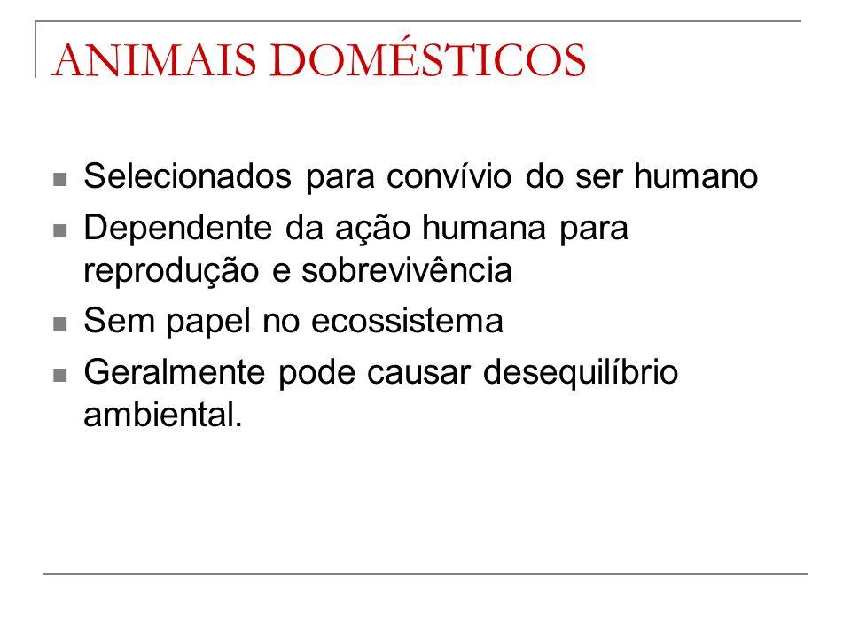 ANIMAIS DOMÉSTICOS Selecionados para convívio do ser humano