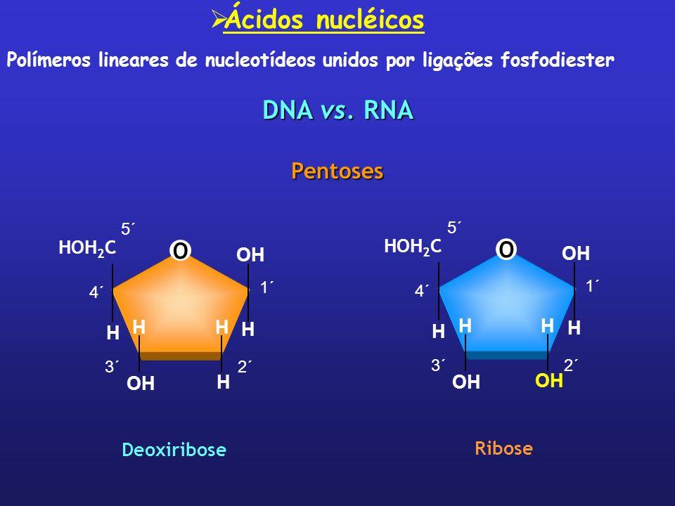 Ácidos nucléicos DNA vs. RNA Pentoses O