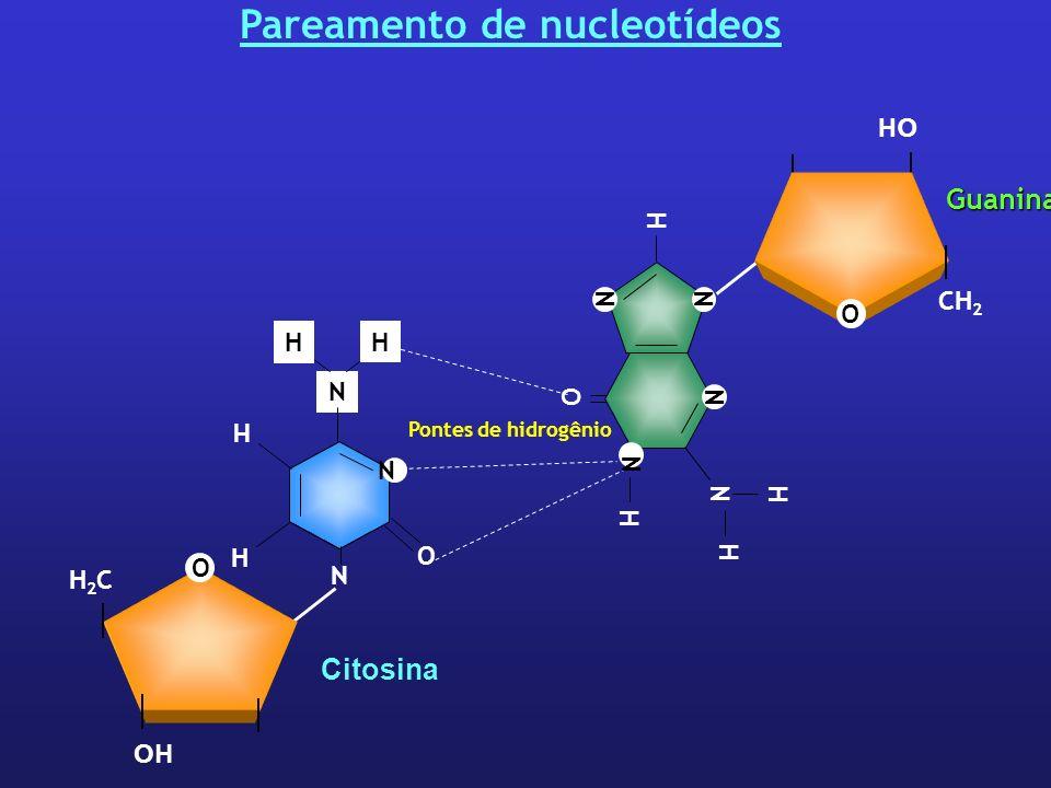 Pareamento de nucleotídeos