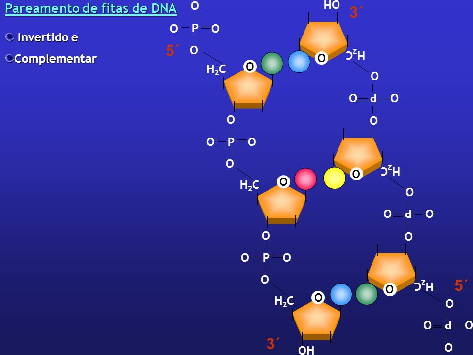 5´ 3´ Pareamento de fitas de DNA OH Invertido e Complementar H2C O P P