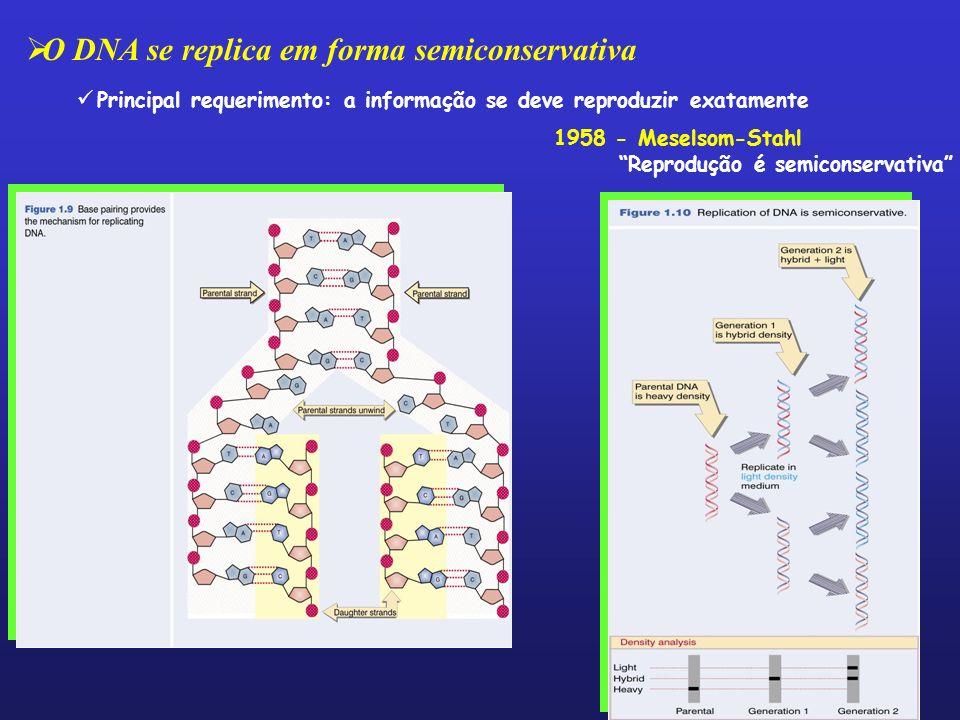 O DNA se replica em forma semiconservativa