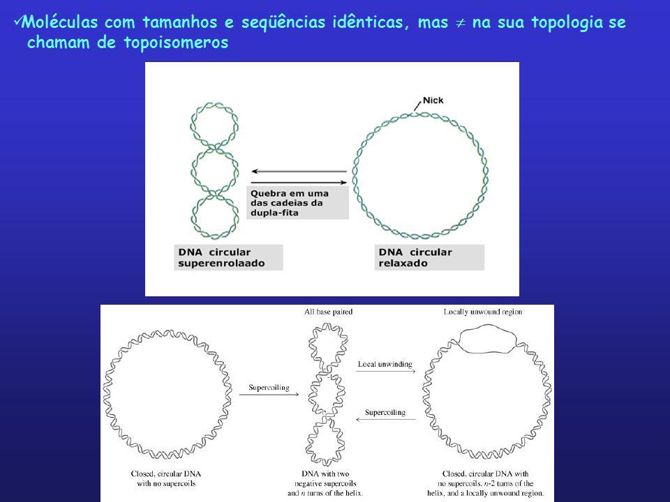 Moléculas com tamanhos e seqüências idênticas, mas  na sua topologia se
