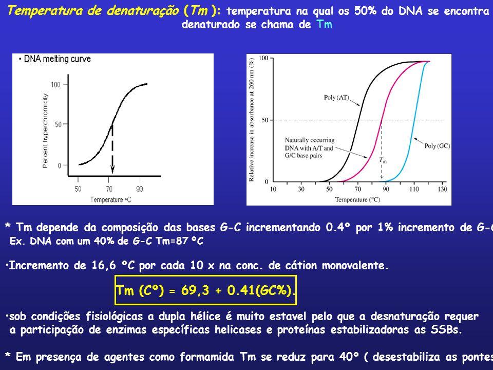 Temperatura de denaturação (Tm ): temperatura na qual os 50% do DNA se encontra denaturado se chama de Tm