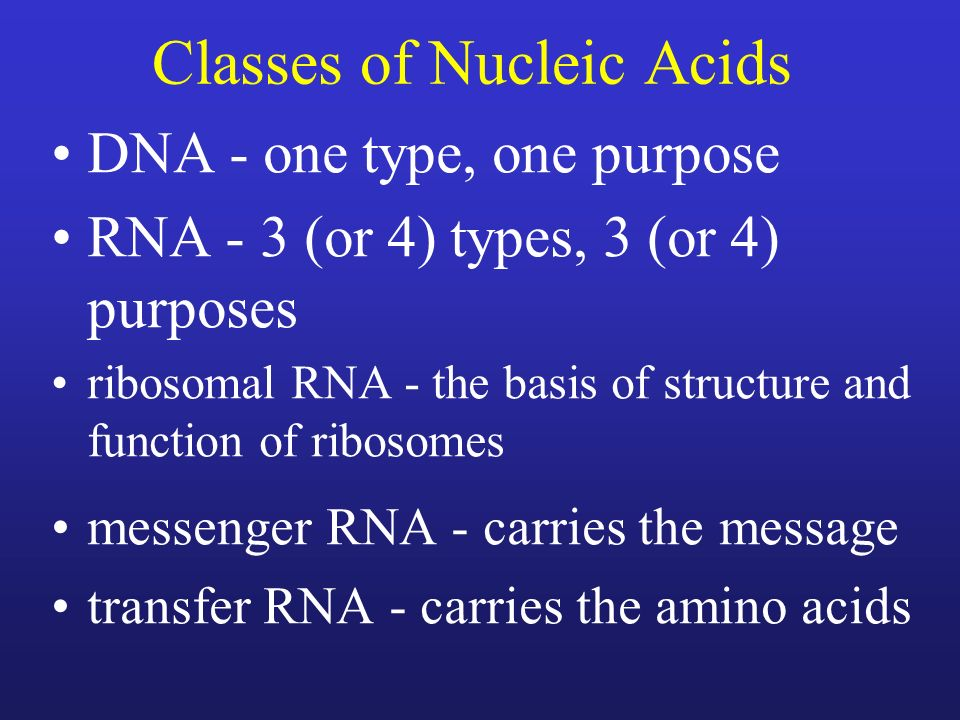 Classes of Nucleic Acids