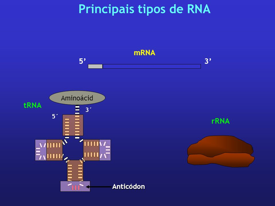 Principais tipos de RNA