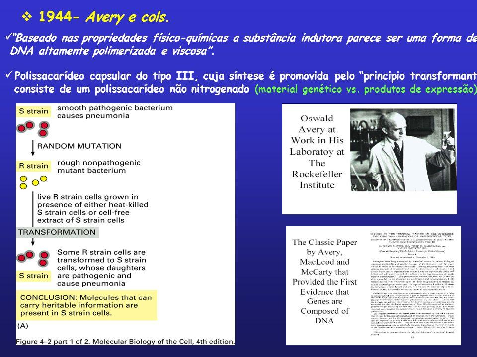 1944- Avery e cols. Baseado nas propriedades físico-químicas a substância indutora parece ser uma forma de.