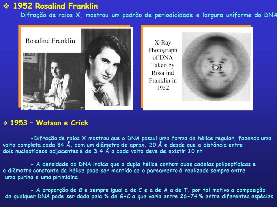 1952 Rosalind FranklinDifração de raios X, mostrou um padrão de periodicidade e largura uniforme do DNA.