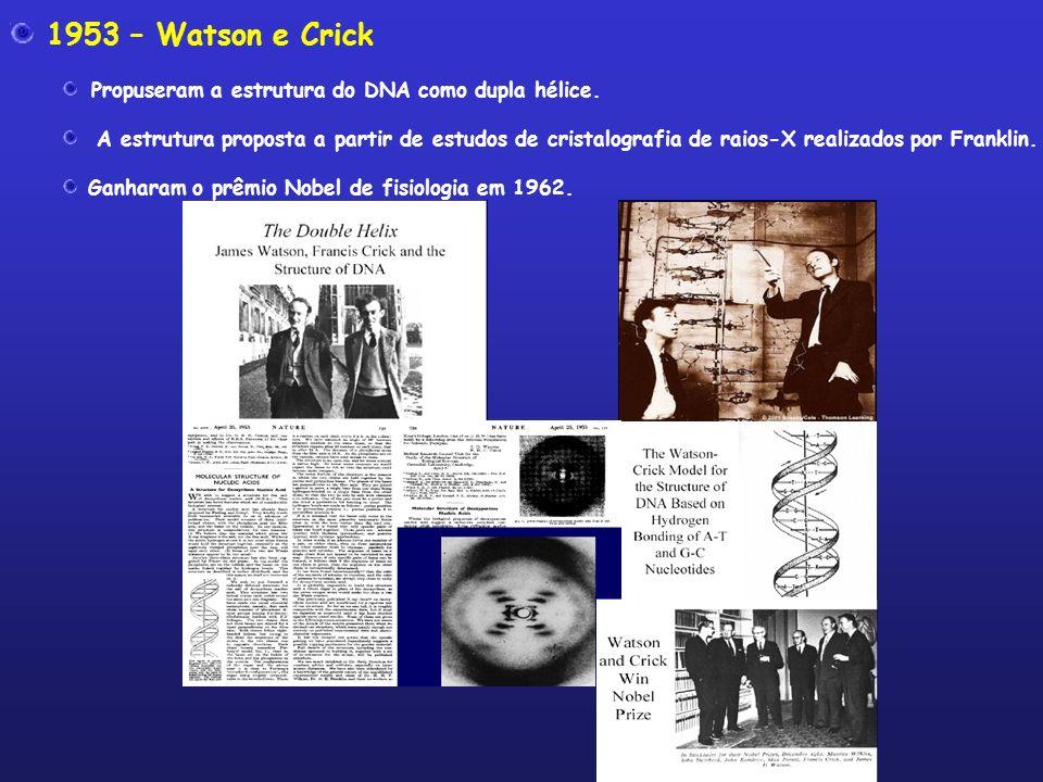 1953 – Watson e Crick Propuseram a estrutura do DNA como dupla hélice.