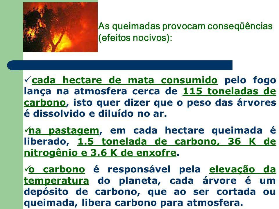 As queimadas provocam conseqüências (efeitos nocivos):