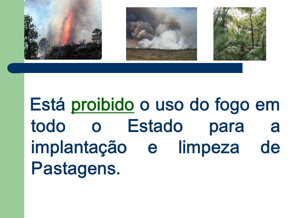 Está proibido o uso do fogo em todo o Estado para a implantação e limpeza de Pastagens.