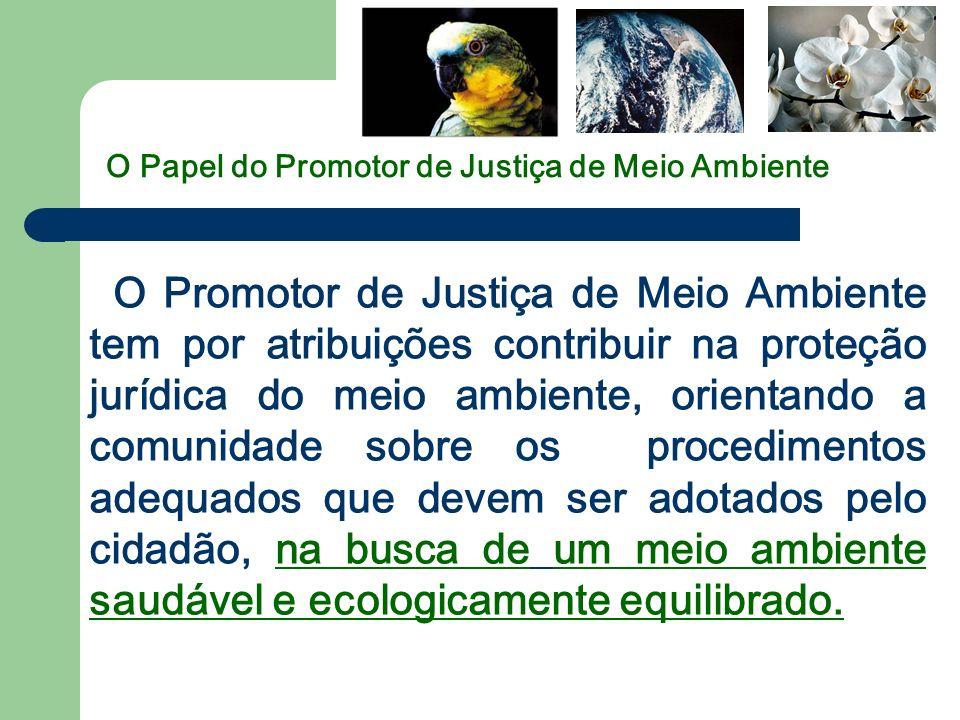 O Papel do Promotor de Justiça de Meio Ambiente