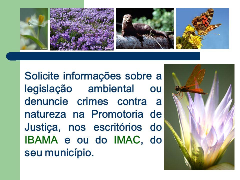 Solicite informações sobre a legislação ambiental ou denuncie crimes contra a natureza na Promotoria de Justiça, nos escritórios do IBAMA e ou do IMAC, do seu município.
