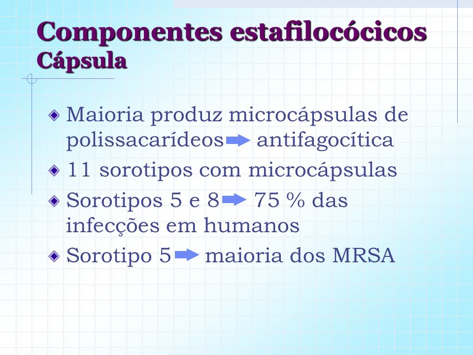 Componentes estafilocócicos Cápsula