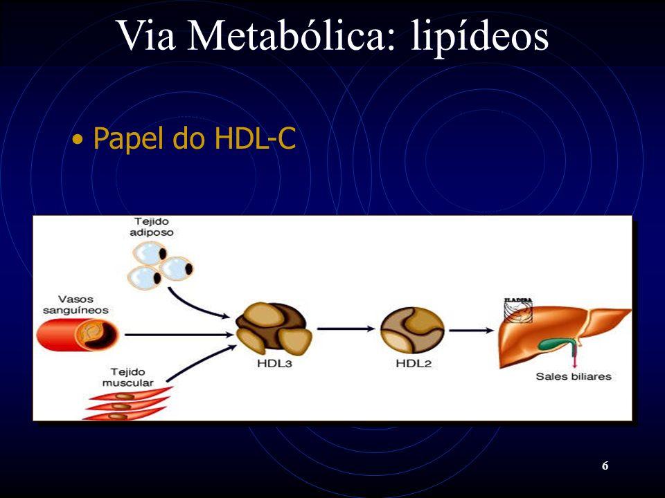 Via Metabólica: lipídeos