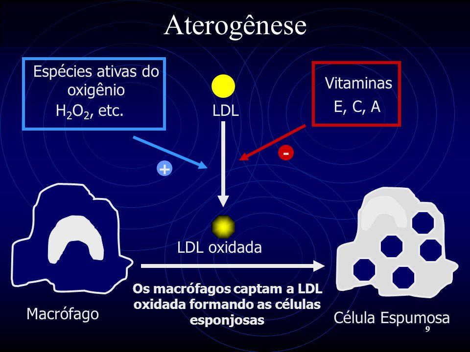 Os macrófagos captam a LDL oxidada formando as células esponjosas