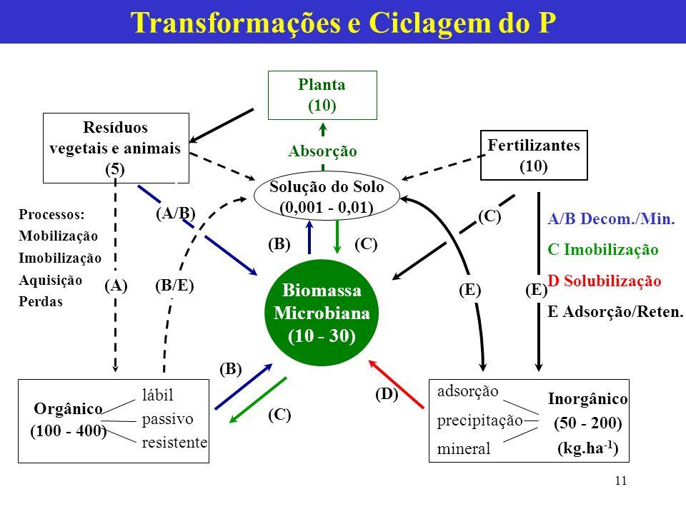 Transformações e Ciclagem do P