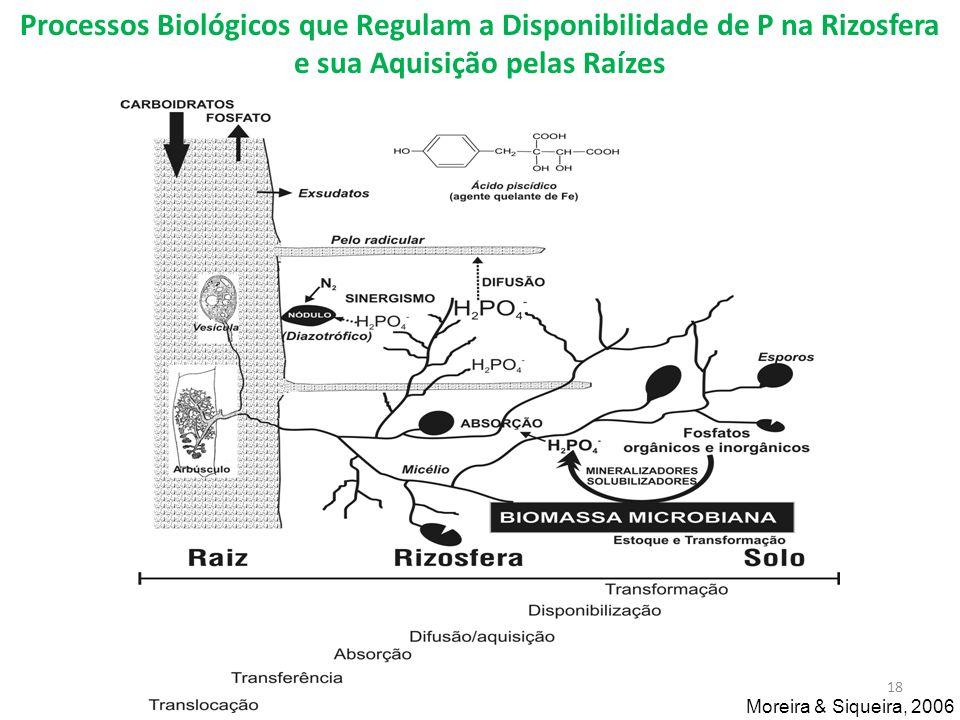 Processos Biológicos que Regulam a Disponibilidade de P na Rizosfera e sua Aquisição pelas Raízes