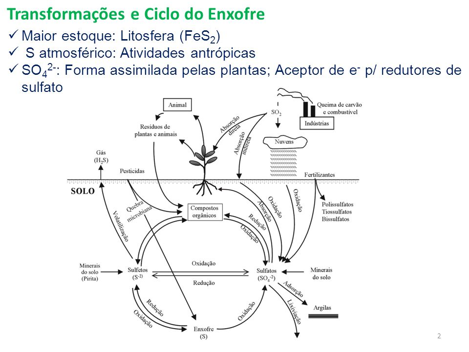 Transformações e Ciclo do Enxofre